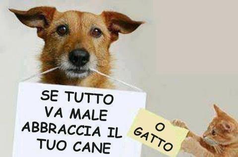 http://izettapc.files.wordpress.com/2012/09/abbraccia-il-cane-o-gatto.jpg
