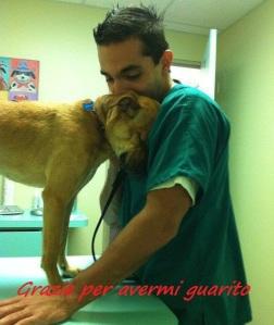 il veterinario amico dei cani