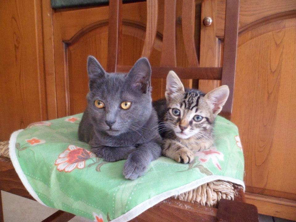 Gattine cercano casa