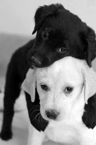 l bianco e il nero