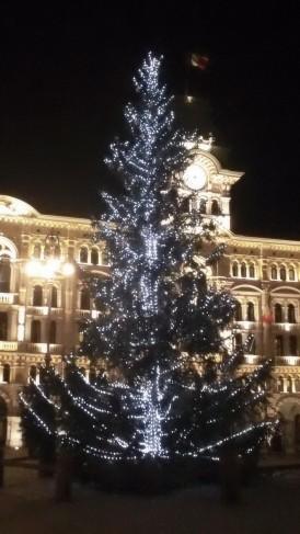 L'abete di Piazza Unità a Trieste
