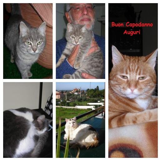 Gatti in collage