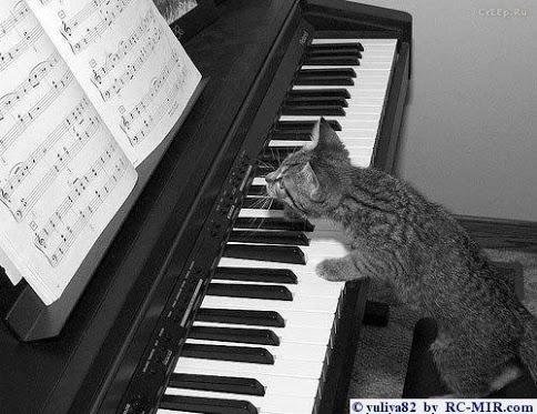 Gatto al pianoforte