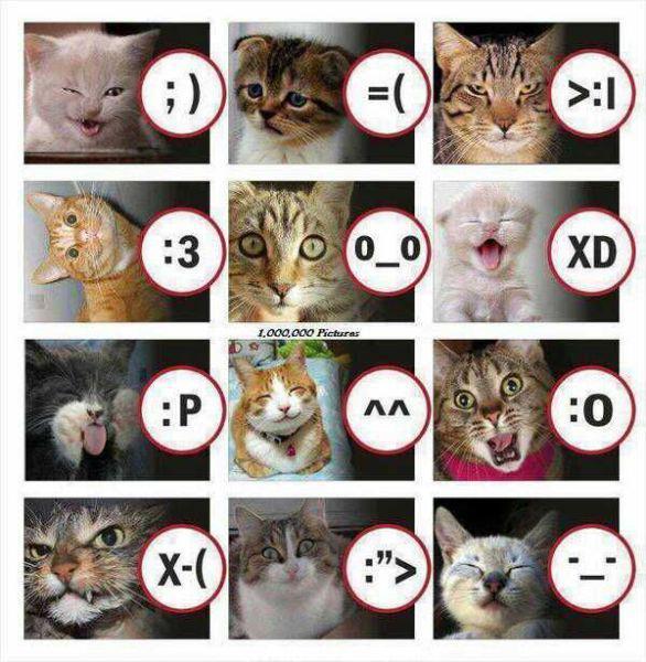 gatti-emoticon