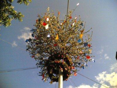 l'albero di maggio