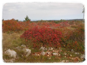 Le foglie rosse del sommacco