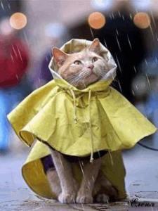 Il mio gattino sotto la pioggia