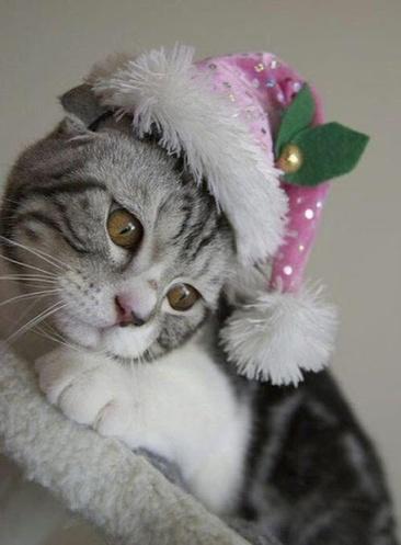 gattino natalizio